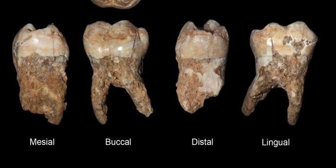 Ces dents ont plus de 400 000 ans. Celle de Lennon est plus récente mais plus chère !