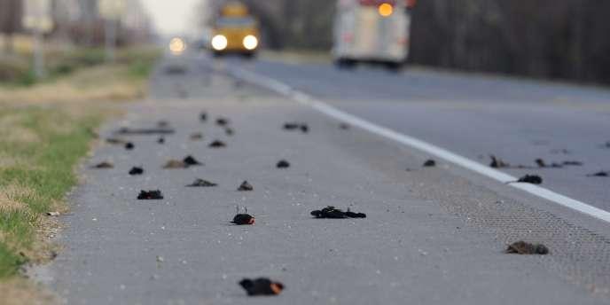 Des centaines d'oiseaux avaient été retrouvés morts en Louisiane au mois de janvier, peu après la découverte de milliers d'oiseaux morts dans l'Arkansas.