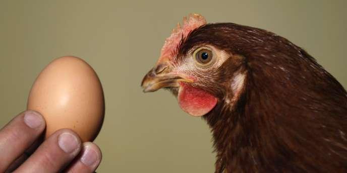 Au total, l'Europe souffre d'un déficit de 200 millions d'œufs par semaine.