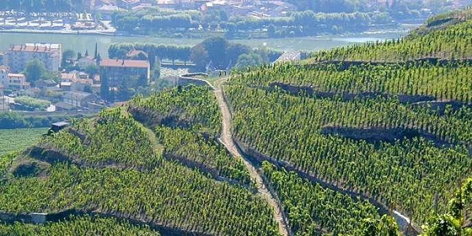 Vue d'ensemble du vignoble de l'Hermitage, dans la vallée du Rhône.