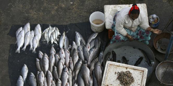 Le poisson assure une part importante des besoins en protéines animales des pays en développement.