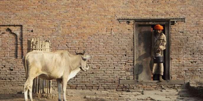 Un Hindou sur le seuil de sa maison à à Pashupati, près de Katmandou. Les vaches sont des animaux sacrés et leur abattage est interdit conformément à la loi.