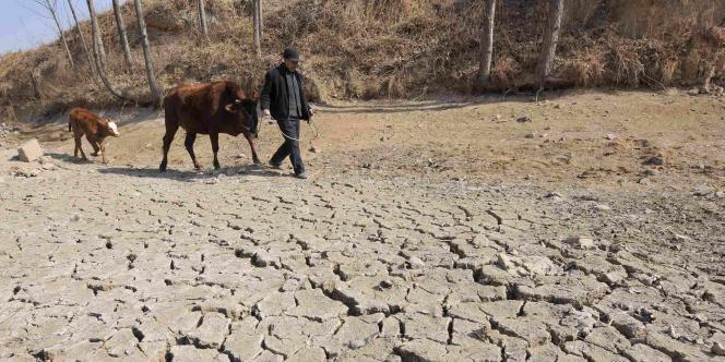 Un champ victime de la sécheresse dans la province chinoise du Shandong, le 30 janvier 2011.