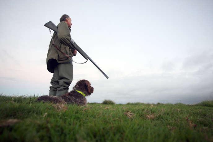 Un chasseur et son chien dans les marais de Graignes (Manche).