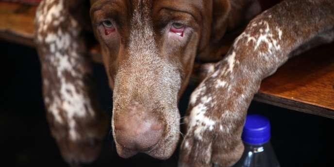 Selon le préfet de Bucarest et des ONG la capitale roumaine compte environ 40 000 chiens errants.