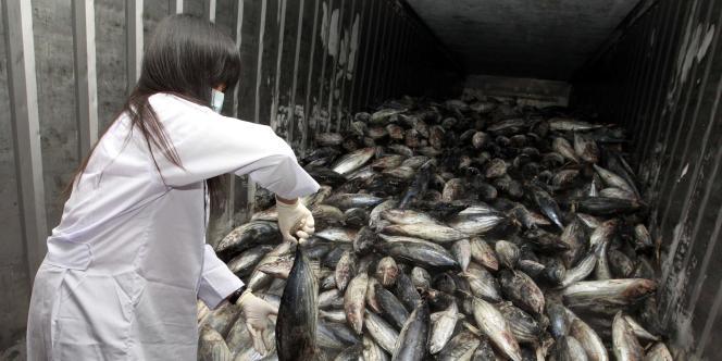 Les rejets de césium 137 dans le milieu marin, après l'accident nucléaire japonais, ont été estimés à 27 millions de milliards de becquerels.