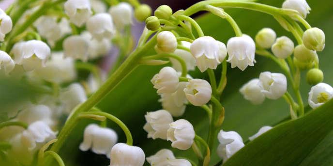 Le 1er mai 2011, les traditionnelles clochettes blanches, payées l'an dernier 42 centimes le brin à Rungis, devraient coûter chez le fleuriste et à la sauvette plusieurs dizaines de centimes supplémentaires par rapport à l'an dernier.