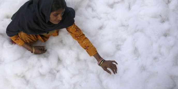 Une récolte de coton à Chandigarh (Inde) en janvier 2009.