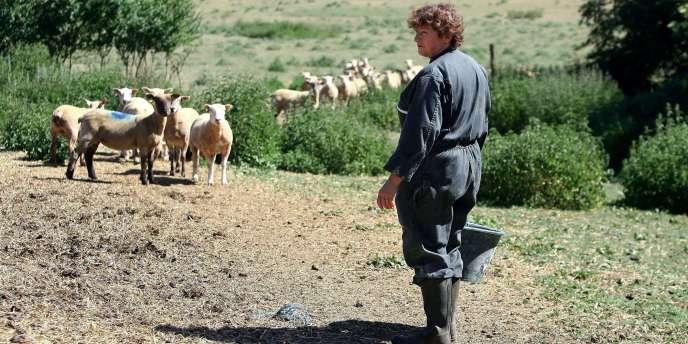 Même en 1976, la sécheresse n'avait pas été aussi précoce et les éleveurs avaient pu sauver l'essentiel de la première fauche de foin.
