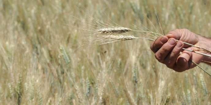 Indemniser les éleveurs frappés par la sécheresse coûtera