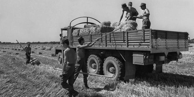 Des militaires ramassent, le 12 juillet 1976 à Saint-Gilles-du-Gard, du fourrage qui était ensuite transporté et distribué par l'armée pour venir en aide aux régions déficitaires, victimes de la sécheresse.