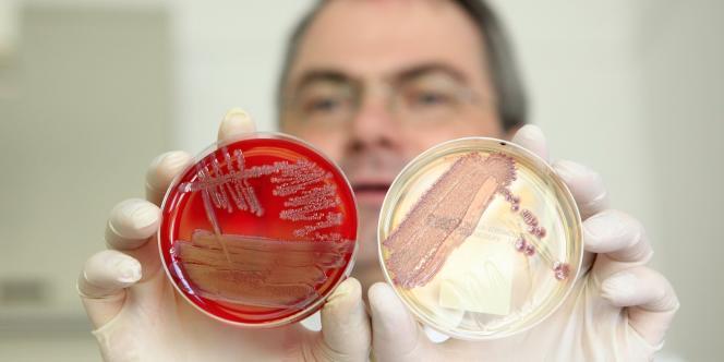 En Allemagne, les scientifiques étudient des prélèvements faits sur les personnes contaminées par la bactérie à l'origine de 22 décès en Europe.