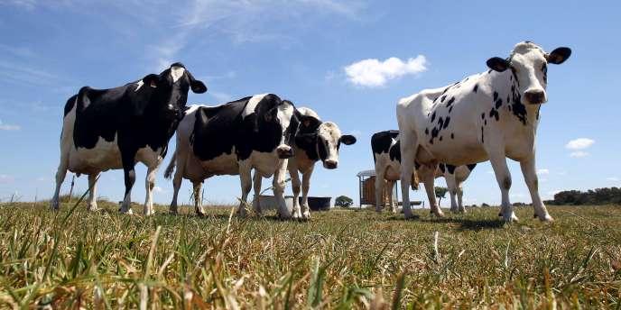 A moins d'un an de la fin des quotas laitiers (avril 2015), la coopérative Laïta dévoile un plan d'investissement de 80 millions d'euros pour s'ouvrir de nouveaux marchés et fidéliser ses éleveurs.