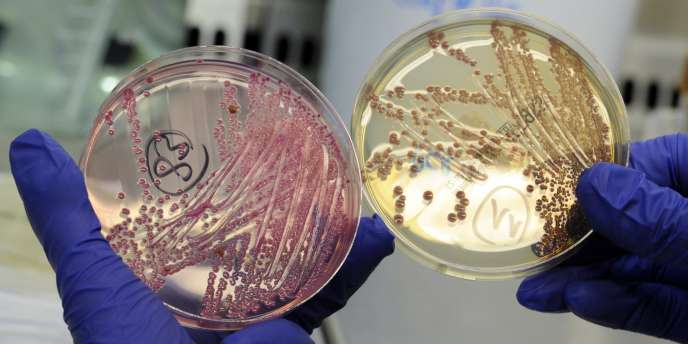 Des bactéries analysées dans un laboratoire à Hambourg en juin 2011.