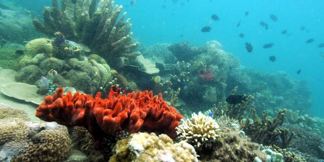 Ce centre sera supervisé la Commission océanographique intergouvernementale des Nations Unies et l'Organisation des Nations unies pour l'alimentation et l'agriculure (FAO).