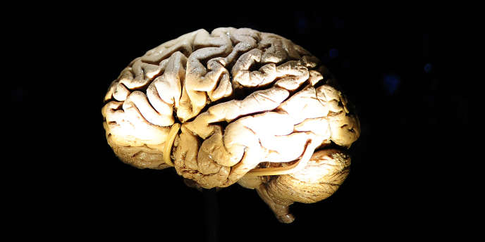 Deux grandes études internationales ont permis d'identifier des modifications génétiques héréditaires associées à une accélération du vieillissement cérébral.