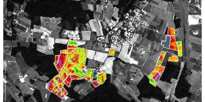 Grâce à une carte satellitaire, les viticulteurs peuvent voir l'état de végétation (peu développé en mauve, moyen en rouge et jaune, élevé en vert) et mieux sélectionner leurs raisins.
