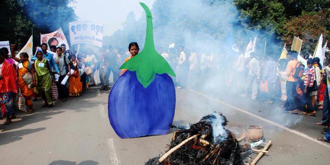Manifestation contre l'aubergine génétiquement modifiée, à Bhubaneswar, dans le nord-est de l'Inde, en janvier 2010.