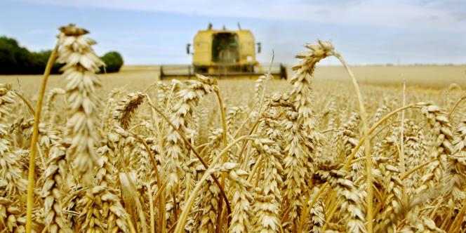 La production de céréales devrait baisser de 2,4 % à 2 458 millions de tonnes par rapport au niveau record de 2013. Mais, malgré ce recul, il s'agirait là de la deuxième meilleure performance de l'histoire.