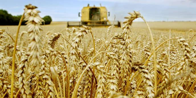 En 2014, les stocks mondiaux de céréales sont attendus en hausse de 11 %, à 569 millions de tonnes, soit