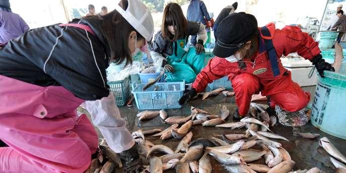 Greenpeace s'inquiète du manque de transparence du gouvernement japonais, quant à la traçabilité des aliments.