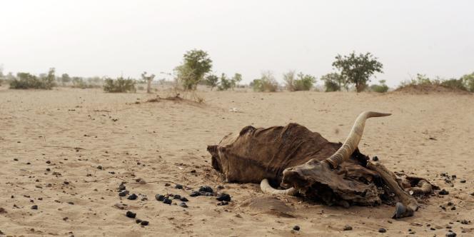 La désertification est à l'origine d'une des pires crises alimentaires qu'ait connue l'Afrique depuis trente ans.
