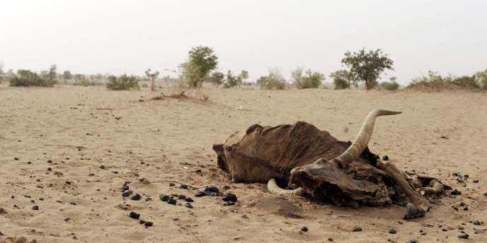 Nord du Niger, le 29 mai 2010.