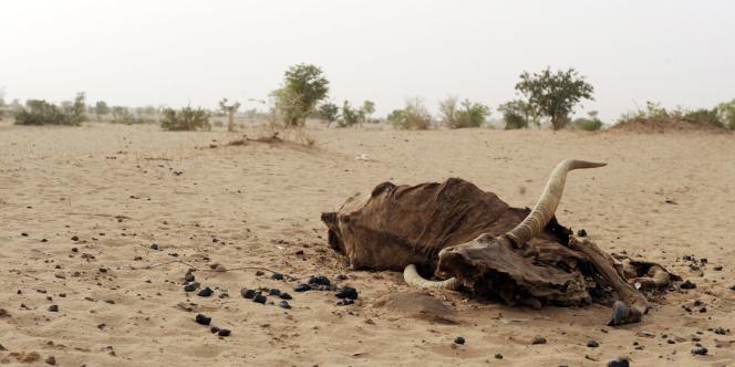 De la Mauritanie au Tchad, les récoltes et les troupeaux souffrent du déficit pluviométrique de 2011.
