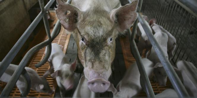 Cette viande plus chère était vendue sous un étiquetage trompeur depuis vingt mois.