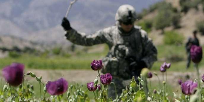Un soldat américain détruit partiellement un champ de pavots, lors d'une patrouille militaire à Tani, le 16 avril 2008.