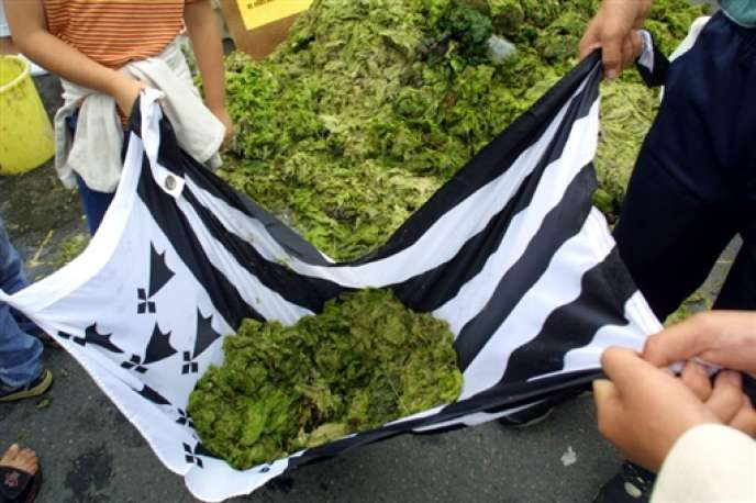 En Bretagne, huit baies sont concernées par le plan de lutte contre les algues vertes lancé par le gouvernement.