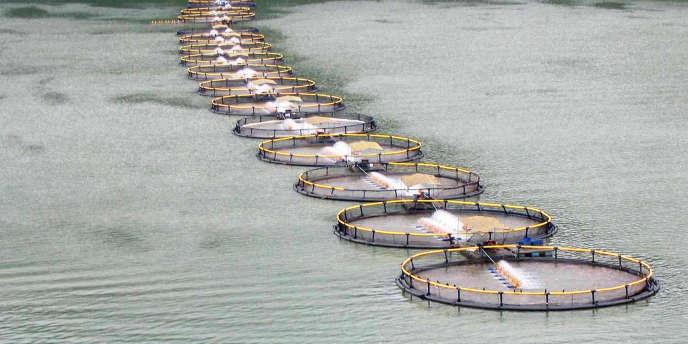 Une ferme de tilapia au Honduras. Le tilapia, la carpe, chanos, poisson-chat, saumon, anguille représentent 85 % de la production mondiale de poissons.