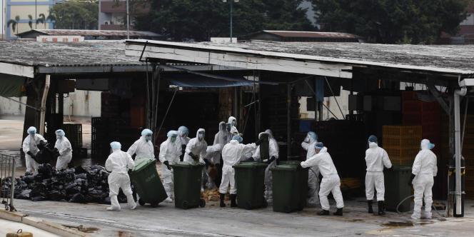 Hong Kong a relevé, le 21 décembre, son niveau d'alerte à la grippe aviaire et décrété un embargo provisoire sur les importations de volaille vivante après la mort sur le territoire de trois volatiles porteurs du virus H5N1.