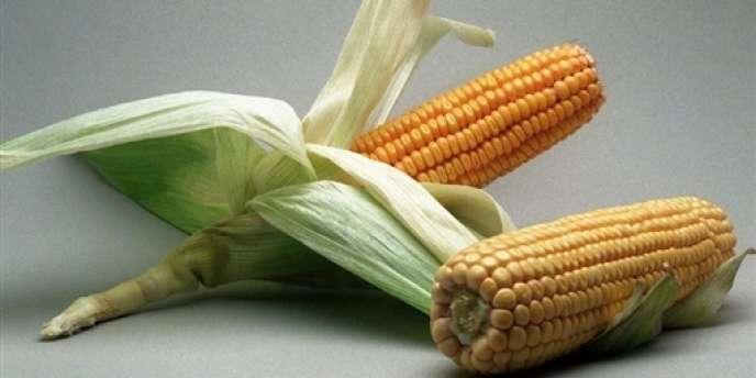 Le conseil d'Etat avait suspendu en novembre une interdiction datant de 2008 de cultiver et de commercialiser ce maïs transgénique.