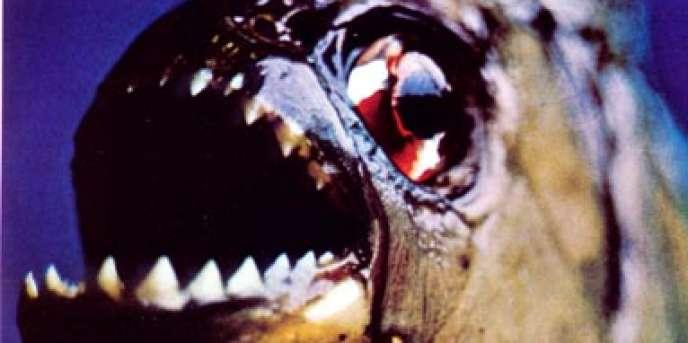Le cousin du Piranha retrouvé dans la Seine, le Pacu, n'attaque pas l'homme.
