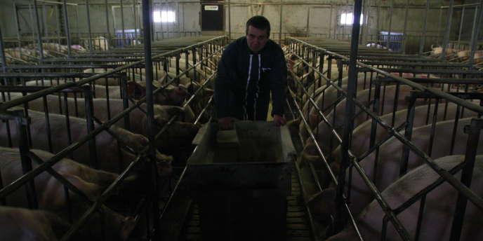 Pascal Aubry possède une exploitation de cent cinquante truies gestantes à Simplé, en Mayenne.