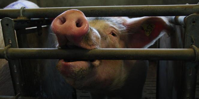 Selon l'ONG Protection mondiale des animaux de ferme,