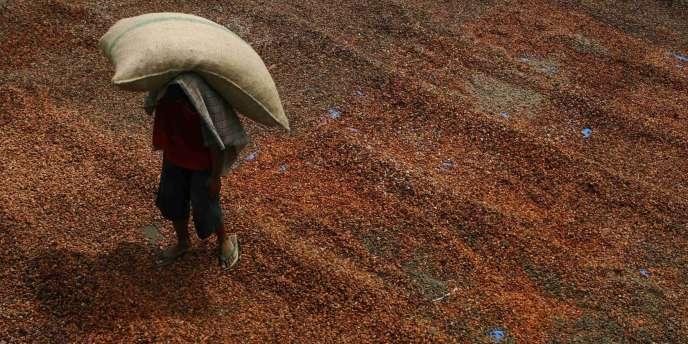 En Côte d'Ivoire, premier pays producteur et exportateur mondial de cacao.