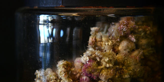 Plantes séchées dans un bocal, dans l'herboristerie de Patrice de Bonneval à Lyon.