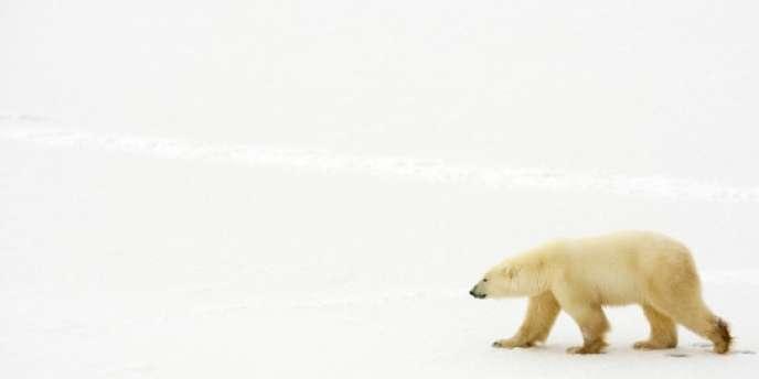 Selon l'UICN, 19 817 espèces s'avèrent menacées dans le monde.