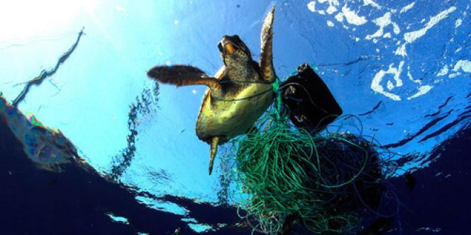 Les tortues s'étouffent fréquemment avec des sacs plastiques qu'elles prennent pour des méduses.