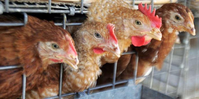 Le volailler breton Doux, en redressement judiciaire depuis le 1er juin 2012, va demander aux juges un sursis supplémentaire de six mois.
