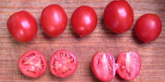Le génome de la tomate ne montre qu'un peu plus de 8 % de divergence avec celui de la pomme de terre.