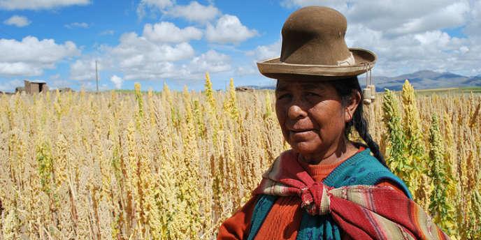 Le quinoa est cultivé sur les hauts plateaux andins de Bolivie..