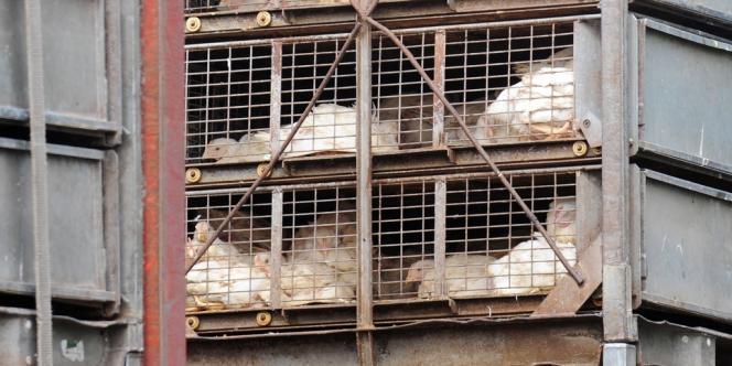 Doux, le volailler breton, est en redressement judiciaire depuis le 1er juin 2012.
