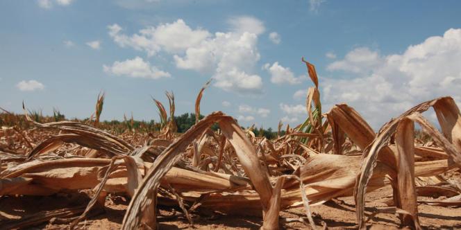 Incendies gigantesques, rivières à sec, récoltes perdues... La sécheresse qui frappe les Etats-Unis est