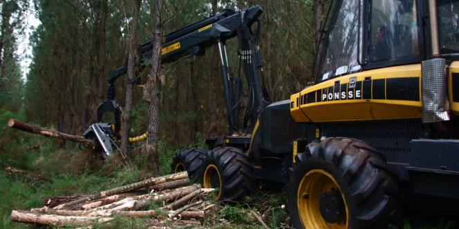 Une abatteuse coupe, ébranche et tronçonne les arbres d'une parcelle de Saint-Vincent de Paul, dans les Landes.