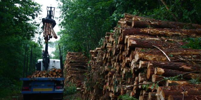 Un tracteur charge les billons débités et les dépose en bordure de route.