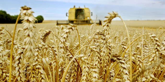 La production de certains carburants est accusée de contribuer à la disparition de cultures vivrières et à la déforestation.
