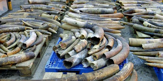 De défenses d'éléphant saisies à Hongkong en 2006.